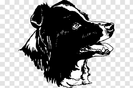 Dog Breed Border Collie Rough Car Sticker Wildlife Transparent Png