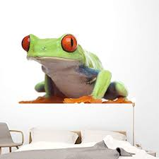 Amazon Com Wallmonkeys Red Eyed Tree Frog Wall Decal Peel And Stick Animal Graphics 72 In W X 47 In H Wm71126 Home Kitchen