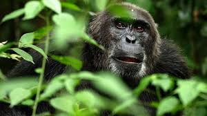 monkey hd wallpapers and backgrounds