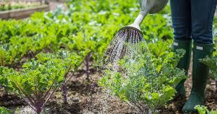 Image result for gardening, images
