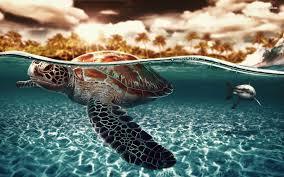cute turtles wallpapers wallpaper cave