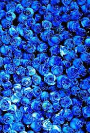 textures and patterns에 있는 Myrna Scott님의 핀 | 파란색 꽃 ...