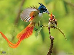 bird birds nature wallpapers
