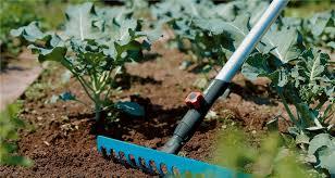 10 garden tools every gardener should