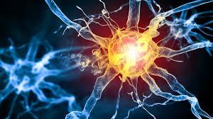 Notre intelligence serait en partie due à des « bogues » du ...