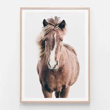 wild horse no 5 framed print or