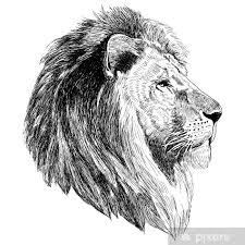 Sketch Illustration Of A Lion Head Wall Mural Pixers We Live To Change