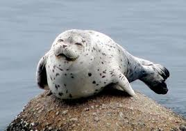 Why do you think this seal is smiling? – Wanna Smile