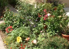 emilys garden