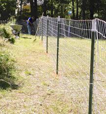 A Goat Fence Hencam