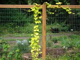 Inspired Garden Fence Ideas Givdo Home Ideas