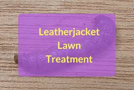 leatherjackets lawn treatment