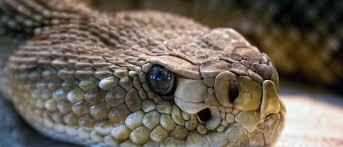 Keep Snakes Away Humane Wildlife Control Society