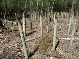 Protecting Fence Posts From Rot Jlc Online