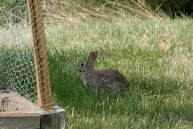 Rabbit Proof Garden Fencing Lovetoknow