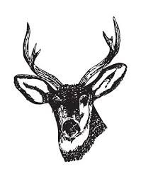 Deer Buck Head Vinyl Wall Decal Sticker 649 Stickerbrand