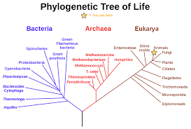 8.5: Phylogenetic Trees - Biology LibreTexts