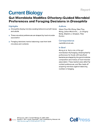 Gut Microbiota Modifies Olfactory-Guided Microbial Preferences and Foraging  Decisions in Drosophila