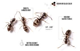 50+ Ant Treatment At Home  PNG