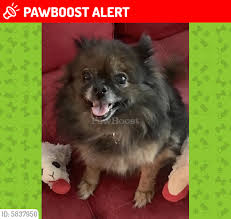 "UPDATE*** REUNITED!! Matika ""mattie""... - West Palm Beach, FL - Lost Dogs,  Cats & Pets | Facebook"