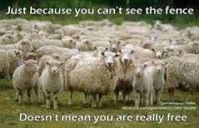 Just Because You Cant See The Fence Doesnt Mean You Are Really Free Teacher Humor Teacher Memes Sheep