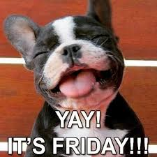 happy friday to all dogs cute