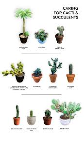 Caring For Cacti Succulents Jacintha Payne