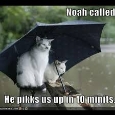 funny quotes rainy days funny inspirational quotes
