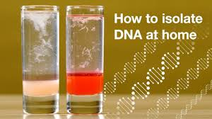 home dna extraction you