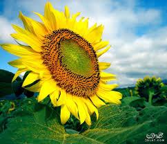 زهور الربيع الرائعه 2020 اجمل ورد في ربيع2019 زهور رائعه وجميله