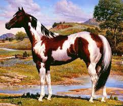 Kansas Paint Horse Association - Home | Facebook
