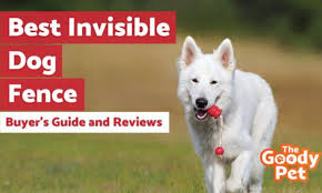 7 Best Invisible Dog Fence November 2020 Reviews The Goody Pet