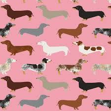 desktop weiner dog wallpapers 79 images