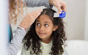 head lice knowing when lice treatment