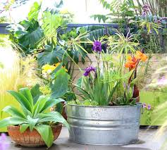container garden planting ideas