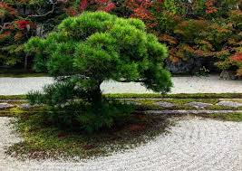 zen garden zen mind half day tour