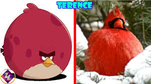 Angry Birds Characters In Real Life - YouTube