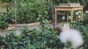 vegetables to grow for beginner gardeners