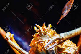 Closeup Underwater Image Of King Crab ...