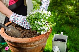 when to plant in ontario dirt