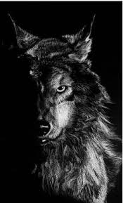 awesome wolf wallpapers 2521vr4