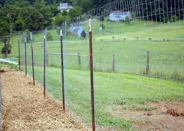 What S The Best Kind Of Chicken Wire Fencing