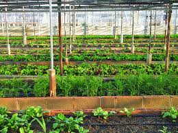 types and benefits of urban agriculture
