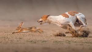 صور حيوانات مضحكة اجمل طرائف الحيوانات بالصور روح اطفال