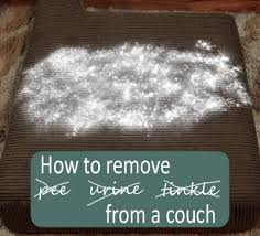 how to remove and urine from couch