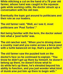 The Definition Of A Post Turtle Album On Imgur
