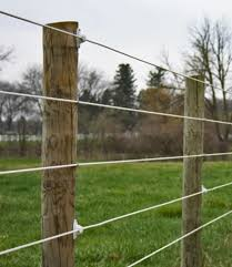 White Coated Electric Wire Fence For Bucking Bulls Horse Fencing Natural Fence Ranch Fencing