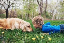 Niño Y Su Perro Golden Retriever Tirado En El Pasto Mirando El Uno ...