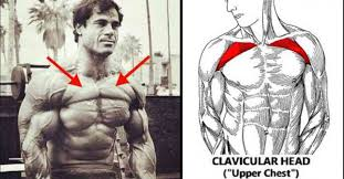8 tips for building a big upper chest