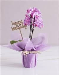 luxury phalaenopsis orchids gift